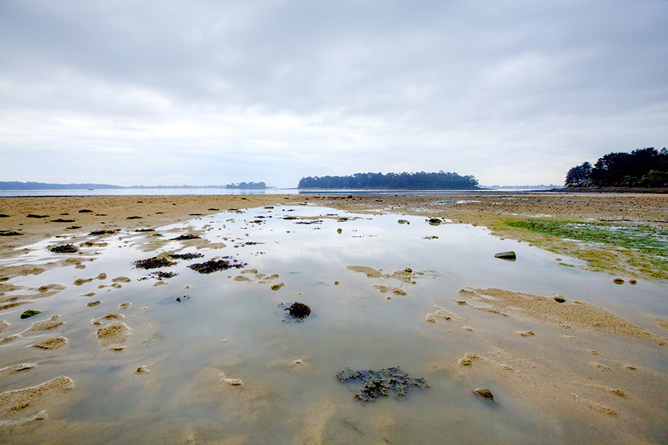 Gulf of Morbihan at low tide Morbihan, France.