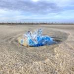 Coastline pollution at Napoleon Beach , Port-Saint-Louis du Rhone, Bouches-du-Rh™ne, France.
